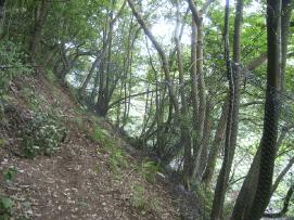 立木利用柵